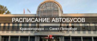 Автобус Красногородск—Санкт-Петербург